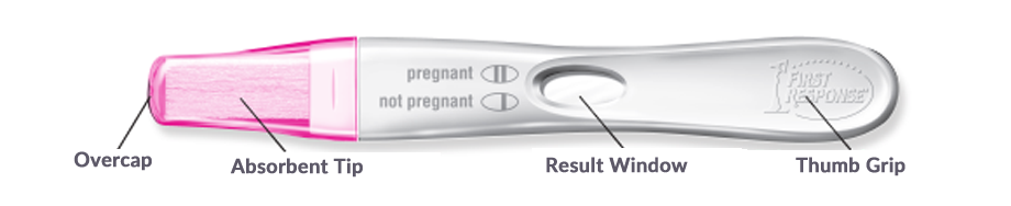 first response pregnancy test instructions