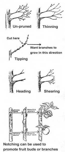 cornaclipper.com instructions for tree pruner and saw in picture form